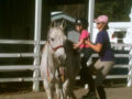 Riding Lessons Info